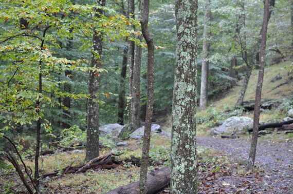 Cunningham Falls State Park